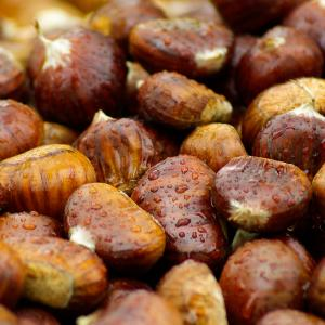 chestnuts of Montefeltro