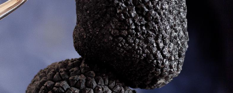 black truffle of Montefeltro