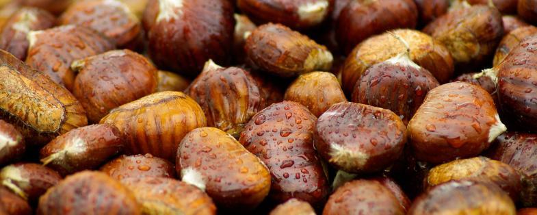 chestnuts of Montefeltro